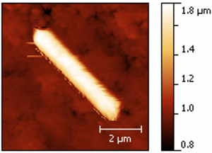 Atomic force microscope image of a roll made of nanoscale fault gouge particles. Development of these rolls along experimental fault zones led to increased fault slip, a process that may occur in natural fault zones.